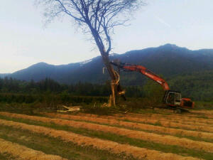 Timber!!!!
