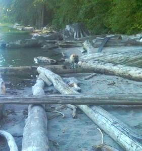 calendar kato jumping logs