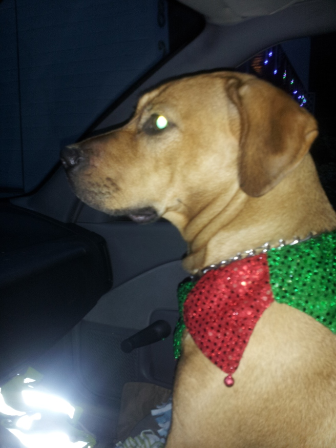 She was a hit on our walks with her festive collar with tinkle bells on it.