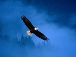 It's hard to soar like an eagle when you fly with seagulls.
