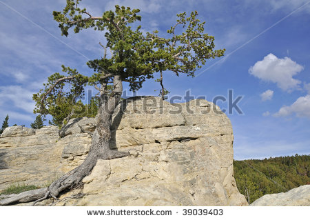 stock-photo-lone-resilient-tree-growing-out-of-rocks-high-on-hilltop-39039403